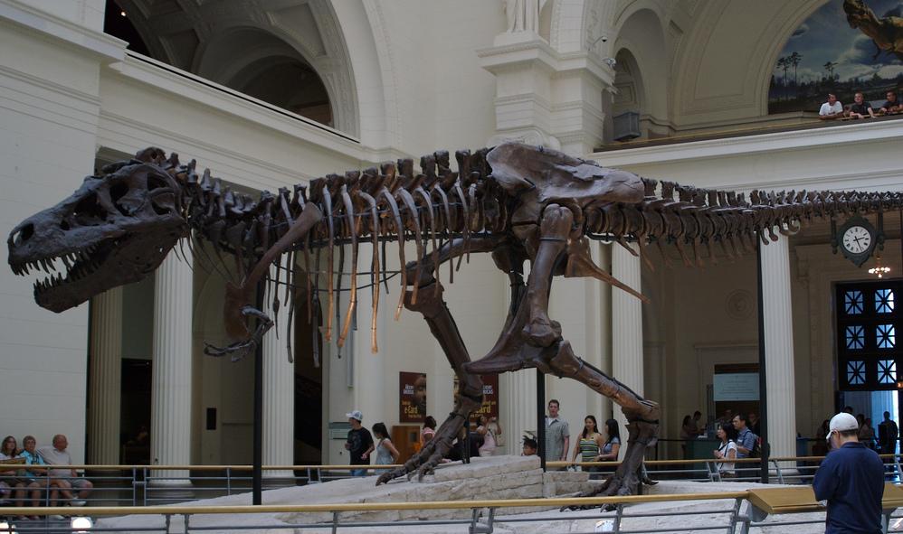 Squelette de T-Rex conservé à Chicago
